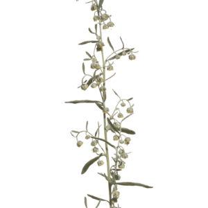 Artemisia dracunculus - Russischer Estragon